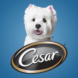 how to get cesar millan to come to you