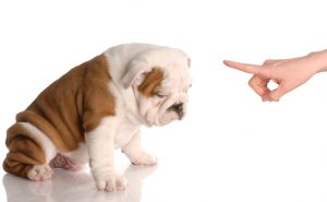 Intriguing facts about puppy potty training