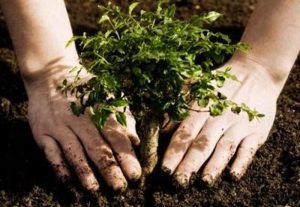 Three Reasons to Buy a Tree for Your Garden